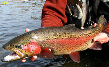 Bucking Rainbow Outfitters | Zirkel Wilderness | Steamboat